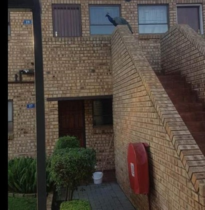 Apartment to rent in Amorosa, Roodepoort